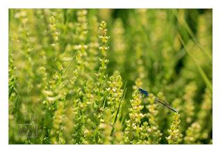 Photo: Eastern Sierras-20120715-100