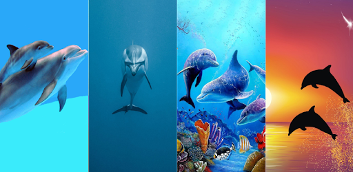 Descargar Hd New Dolphin Wallpapers Para Pc Gratis última