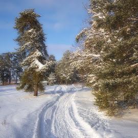 Зимний мотив by Oleg M Kulishov - Landscapes Weather ( дорога, природа, путешествия, погода, пейзаж, зима )