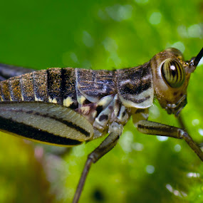 by Joydeep Sen Chaudhuri - Animals Insects & Spiders