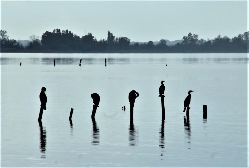 sul lago di pilotto