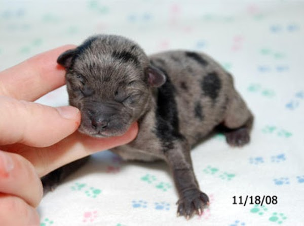 This is Tibby the day she was born on 11-18-08.  What a tiny...