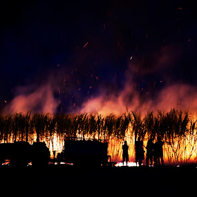 Fire People by Tanya Rossi - News & Events World Events ( bushfire, flames, cane, people, fire )
