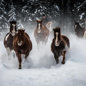 Klingel_20170112_502_6352.NEF_3D-Jan-17-Horses_NIKON-D500.jpg