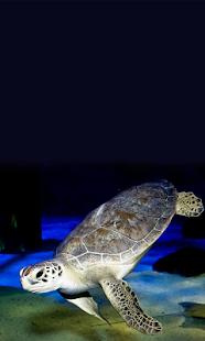 Mystic Aquarium App - náhled