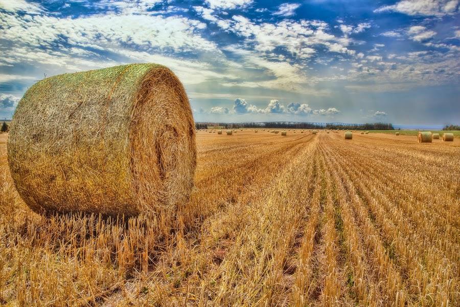 Hay Rolls by Salehin Chowdhury - Landscapes Prairies, Meadows & Fields ( prairies, hay rolls, pei, fields )