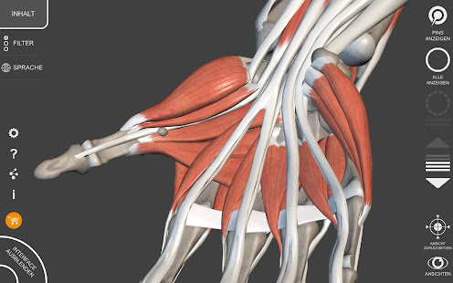 Muskeln | Skelett - 3D Atlas der Anatomie – Apps bei Google Play