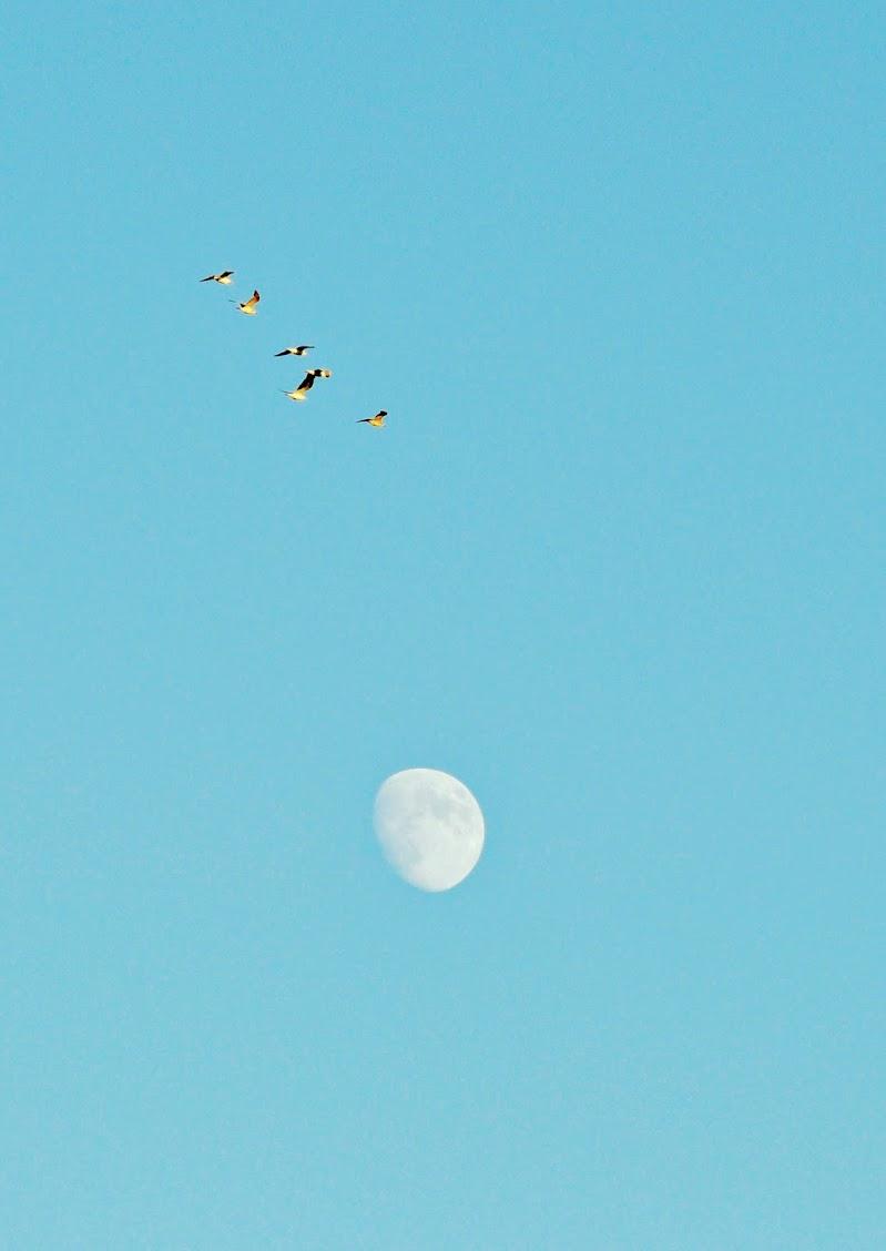 M'agradaria ser una gavina volar lliure al cel di kaos