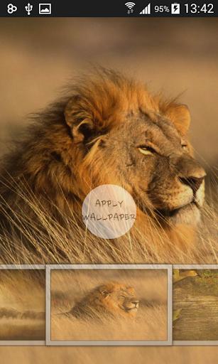 玩免費個人化APP|下載野生動物のGOランチャー app不用錢|硬是要APP