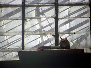 Photo: Feline resident