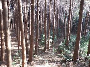 左の植林帯の方が歩きやすそう