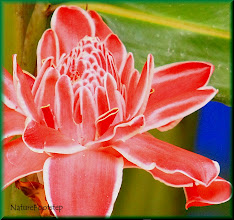 Photo: http://nfbild2.blogspot.com/2011/02/mf-okand-blomma-unknown-flower.html