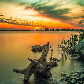 Lakeside Sunset by Eric Wellman - Landscapes Sunsets & Sunrises ( driftwood, sunset, lake,  )