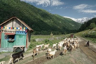 Fast Food. Als wir uns im kleinen Café stärken, kommt eine Herde Ziegen vorbei.