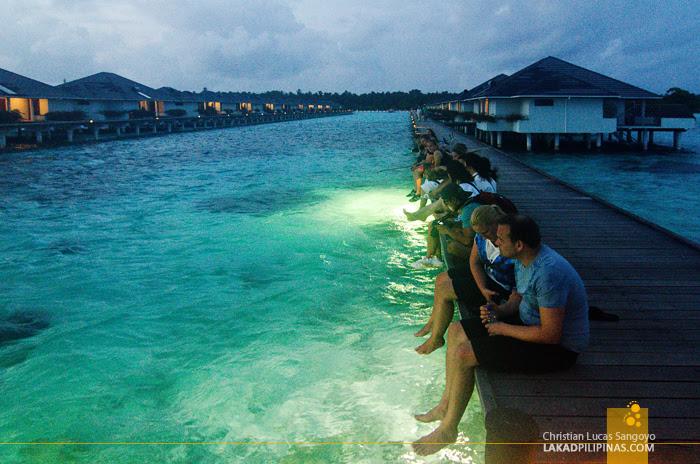Sun Island Resort Maldives Shark Feeding