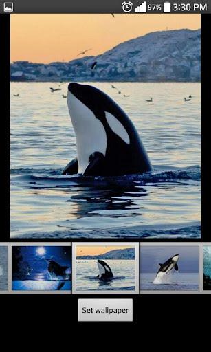 クジラライブHD壁紙