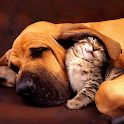 Cats and Dogs Live Wallpaper icon