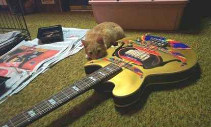 kittenguitar