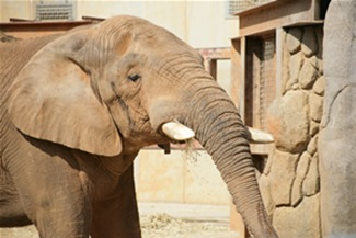elephanttonka