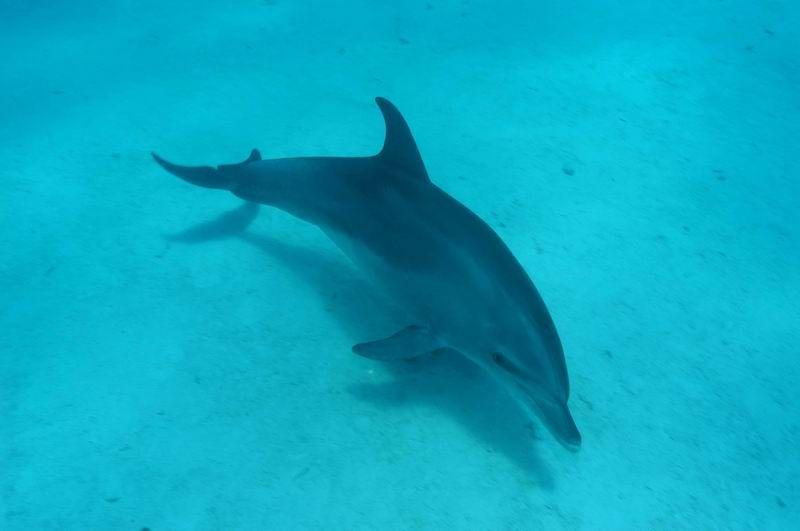 Photo: #042- Egypte. Un Dauphin en Mer Rouge