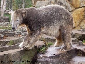 Photo: Knut zeigt sich mit neuer Fellfarbe :-)