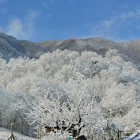 Bianco di