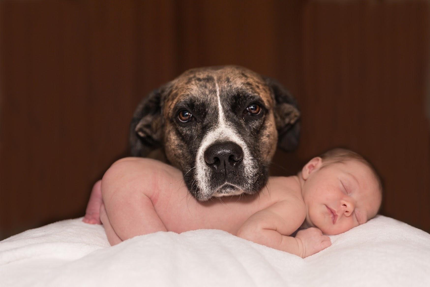 狂犬病予防注射 と 犬の登録 をしましょう
