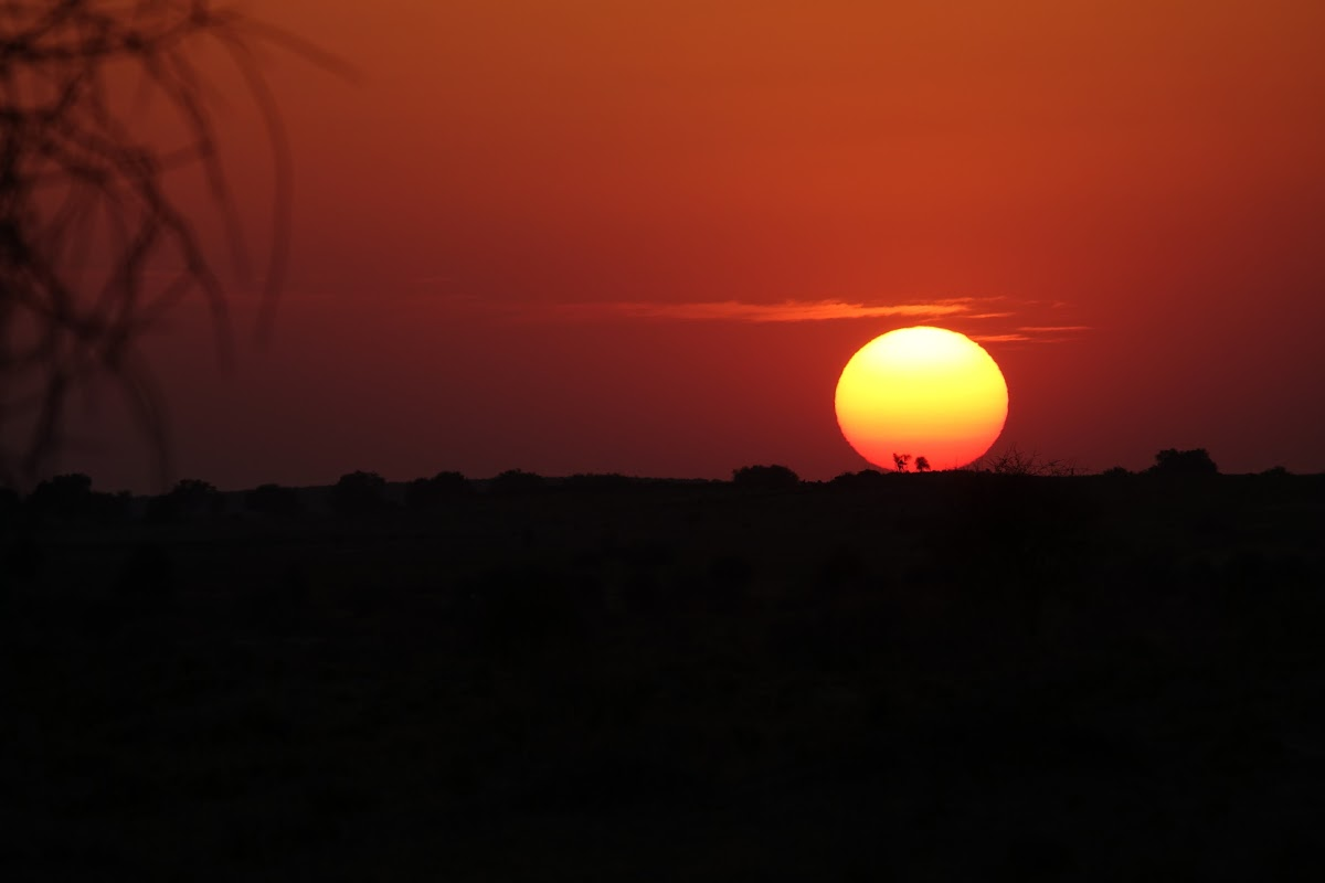 India. Rajasthan Thar Desert Camel Trek. Sunset over the Khaba Dunes