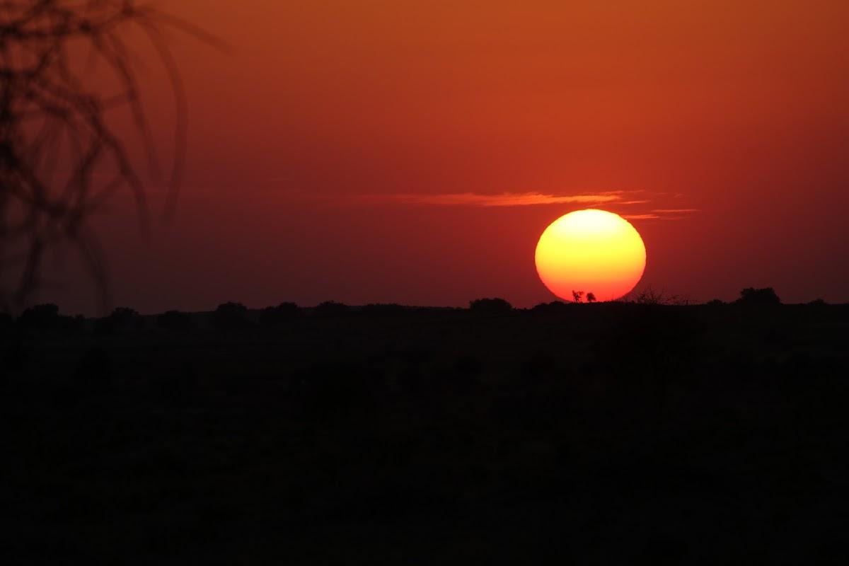 India. Rajasthan Thar Desert Camel Trek. Sunset over the Khaba Dunes