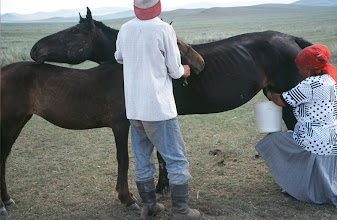 Photo: 03379 ブルド/ハスバター家/馬の乳搾り