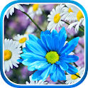 Daisies Flowers Live Wallpaper icon