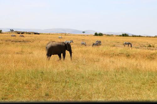 by Reagan Muriuki - Animals Other Mammals