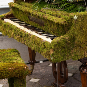 Moss pianno by Viorel Stanciu - Artistic Objects Musical Instruments ( music, look, person, old, piano, wood, grass, vintage, dream, moss, thought, instrument, forgotten, spring, city, urban, chair, style, grand, outdated, town, abandoned )