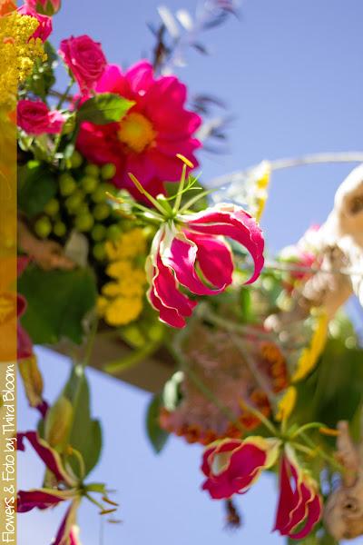 Photo: Gloriosa, one of my favorite flowers!