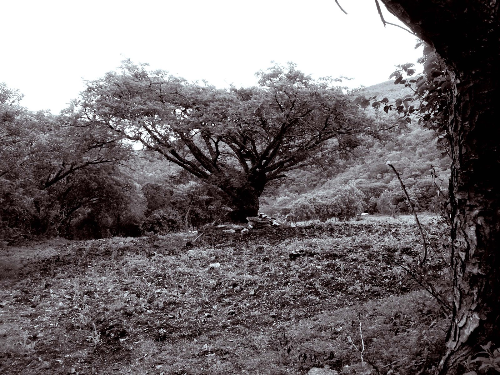 arbol2.jpg