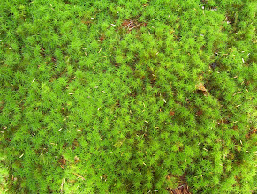 Photo: Moss