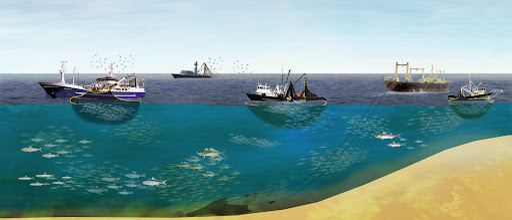 秘鲁渔场-太平洋发给秘鲁的一张优惠券