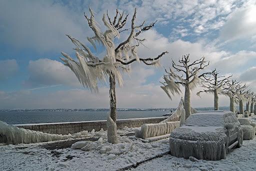 2005年1月瑞士日内瓦湖边冻结的汽车和树
