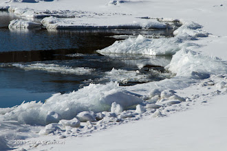 Photo: Spring is about to arrive actually, since the compact ice that has covered the fjord this winter  is breaking up