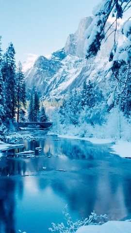 android Winter forest.Nature wallpaper Screenshot 2