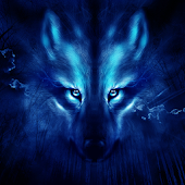 Free Wolf Night Launcher Theme