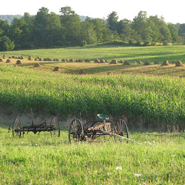 Amish Harvest by Kevin Greek - Novices Only Landscapes ( farm, field, green, hay, amis, corn )