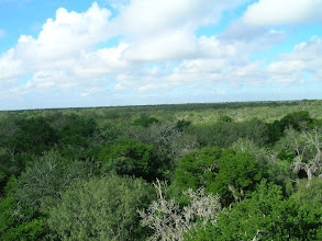 Photo: The Lower Rio Grande Valley and Santa Ana National Wildlife Refuges are comprised of small tracts of vanishing native habitat. This view of riverflat forest is from the observation tower at Santa Ana.