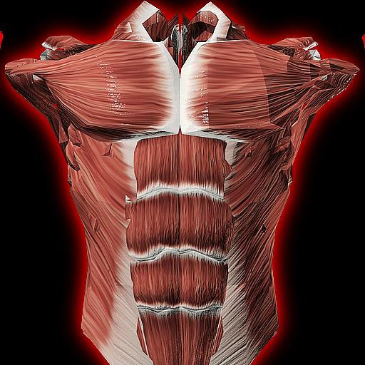Baixar Sistema Muscular em 3D (Anatomia). para Android