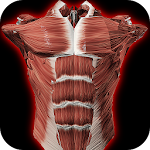 Muscular System 3D (anatomy) 2.0.8