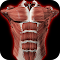 Muscular System 3D (anatomy) file APK for Gaming PC/PS3/PS4 Smart TV