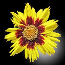 AYLI flower 13 by Michael Moore - Flowers Single Flower