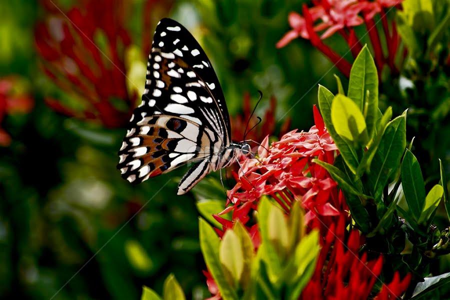 by Eko Janu - Nature Up Close Flowers - 2011-2013