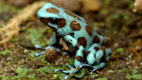 Camouflage and Coloration thumbnail
