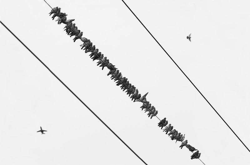 linee aeree di alberto raffaeli